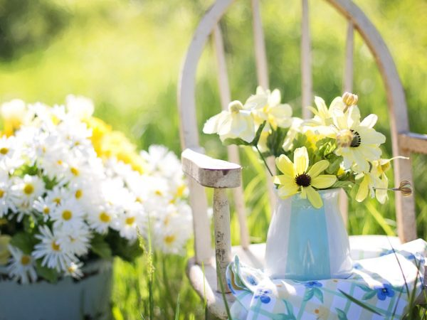 5 smart tips – how to take care of your garden this summer !